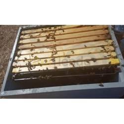 Alimentadores Alimentador de cuadro LANGSTROTH/ DADANT  1.5L  Alimentador cuadro para colmena Langstroth Capacidad 1,5L Tien