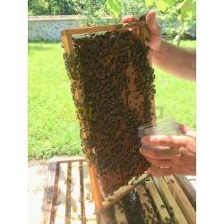 Varroa tester 3 en 1