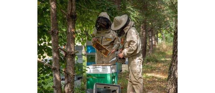 El Ahumador para abejas: tipos de ahumadores y combustible